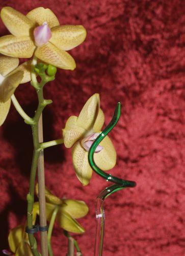 Orchideenstab gedreht grün Blumenstab