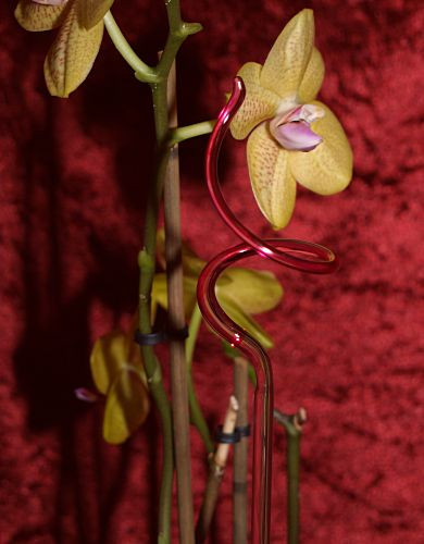 Orchideenstab gedreht rot Blumenstab
