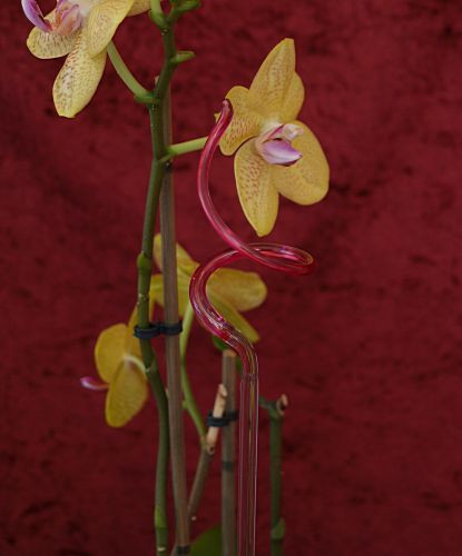 Orchideenstab gedreht pink Blumenstab